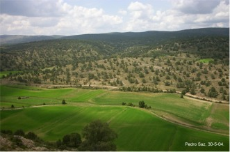 Fotografía 2_Vista del sabinar en Valverde desde El Portillo.