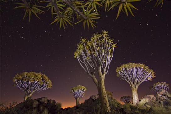 bosque-kokerbooms