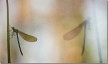 NATURA-XILOCAE-_O6A9816_thumb[1]
