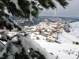 Moscardón nevado